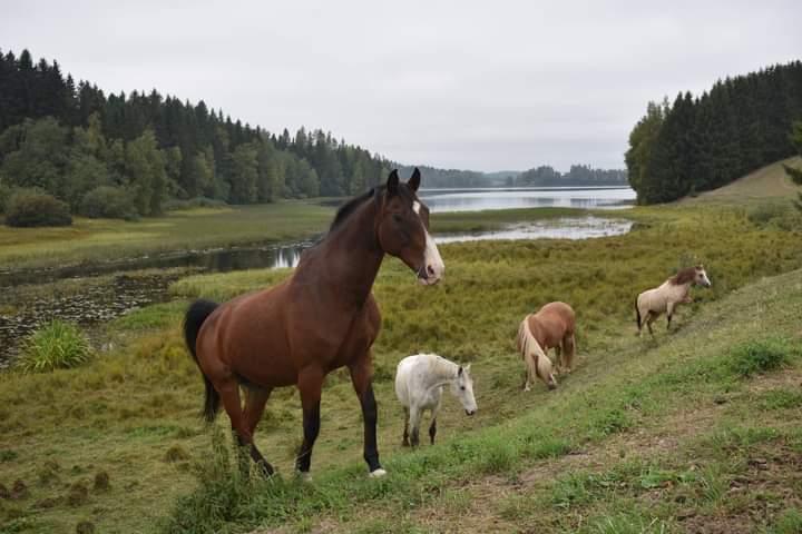 Punaisen pässin lammastila hevoset