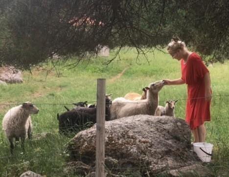 Vanhalan Villalammas on pieni lammastila Laitilassa