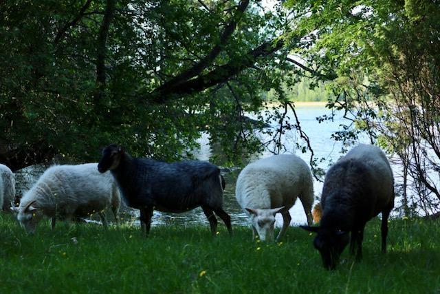 aholaidan lammastila längelmävesi kangasala